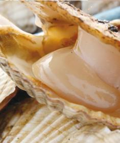 大きな貝にも驚くが、肉厚でビックサイズの貝柱も圧巻。